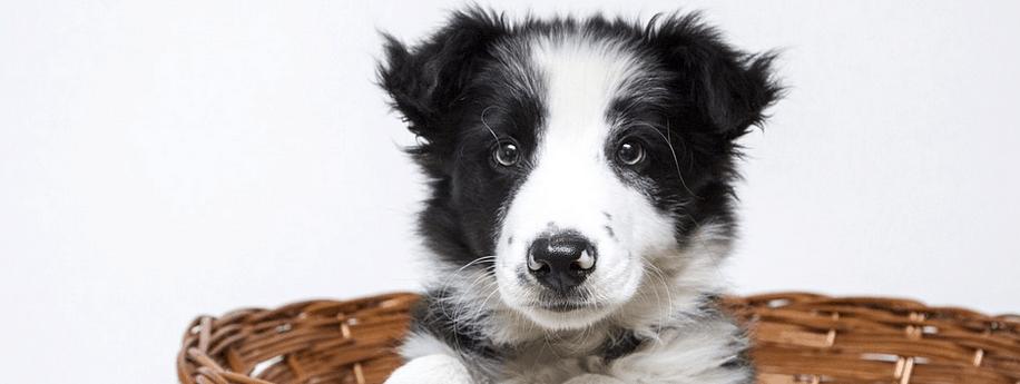 Puppy financing loan in California.