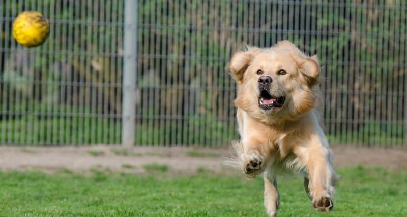 A dog playing at a kennel.