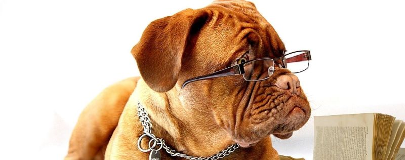 A smart dog with glasses.