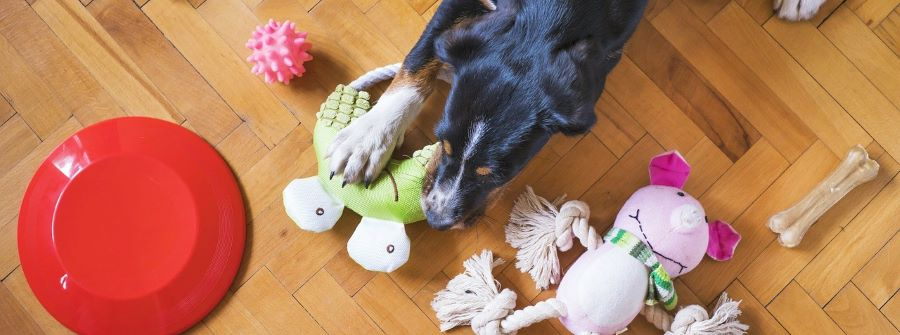 A puppy with separation anxiety.