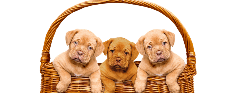 Puppies that you can buy after you apply for a pet loan.