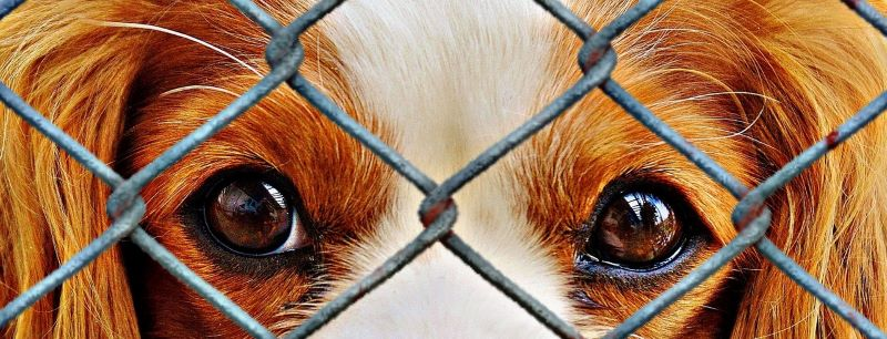 A puppy at an animal shelter